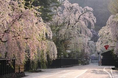 Sakura rolls in samurai district, picture from http://www.japan-guide.com/